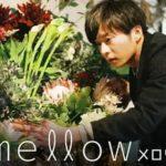 mellow 動画